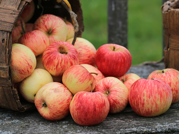 Glycemic Index - Apples