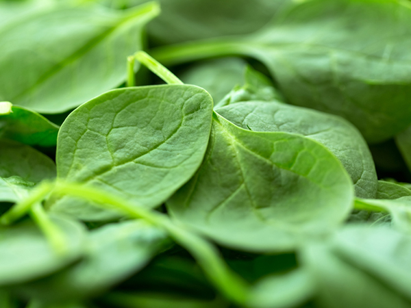 Spinach for pesto