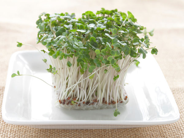 bowl of raw sprouts